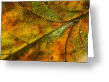 Fall Fusion Greeting Card
