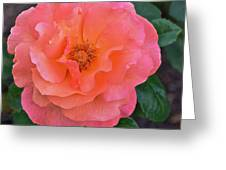 Fall Gardens Full Bloom Harvest Rose Greeting Card