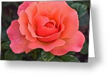Fall Gardens Rosh Hashana Rose Greeting Card
