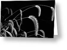 Fall Grass 3 Greeting Card
