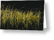 Fall Grasses - Snake River Greeting Card by Sandra Bronstein