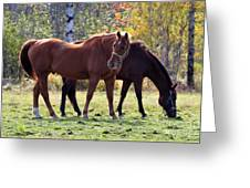 Horses Fall Grazing Greeting Card