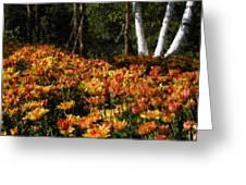 Fall Hike Greeting Card