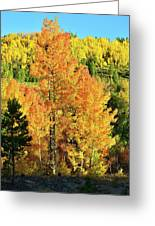 Fall Hillsides Above Dillon Reservoir Greeting Card