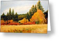 Fall In Chattaroy Greeting Card