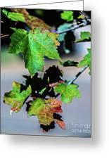 Fall In Full Swing Greeting Card