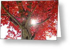 Fall In Georgia Greeting Card