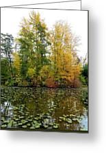 Fall In Kaloya Park 10 Greeting Card