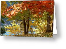Fall In Kaloya Park 4 Greeting Card