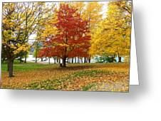 Fall In Kaloya Park 5 Greeting Card