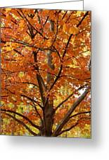 Fall In Kayloya Park 2 Greeting Card