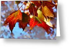 Fall In Maple Ridge Greeting Card