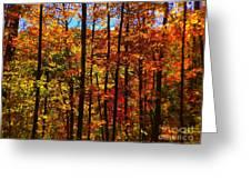 Fall In Ontario Canada Greeting Card