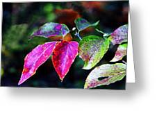 Fall In Shades Of Purple Greeting Card