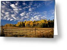 Fall In The Cariboo Greeting Card