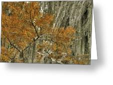 Fall In The Swamp Greeting Card