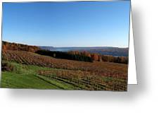 Fall In The Vineyards Greeting Card