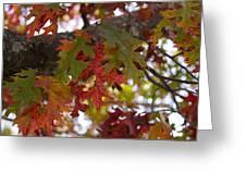 Fall In Virginia Greeting Card