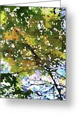 Fall In Woods Greeting Card