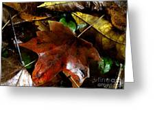 Fall Into Fall Greeting Card