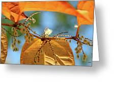 Fall Jewels Greeting Card
