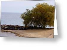 Fall Lake Tree Greeting Card