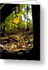 Fall Leaf And Twig Greeting Card