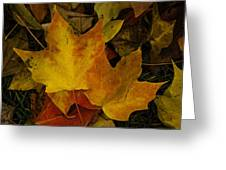 Fall Leaf Litter Greeting Card
