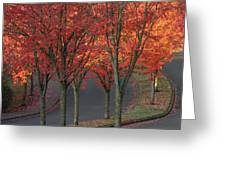 Fall Leaves Along A Curved Road Greeting Card