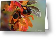 Fall Leaves And Berries Greeting Card