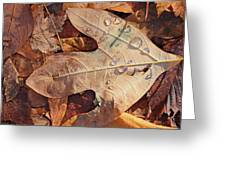 Fall Leaves And Dew 8 2017 Greeting Card