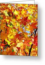 Fall Leaves Background Greeting Card by Carlos Caetano