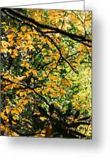 Fall Leaves In The Smokies Greeting Card
