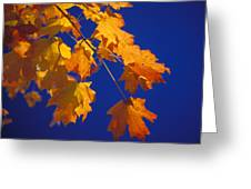 Fall Leaves In Virginia Greeting Card