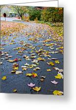 Fall Leaves Greeting Card by Michael Tesar