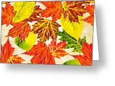 Fall Leaves Pattern Greeting Card