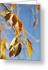 Fall Leaves Study 3 Greeting Card