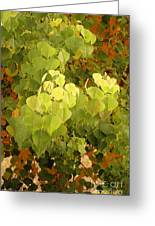 Fall Leaves. Greeting Card