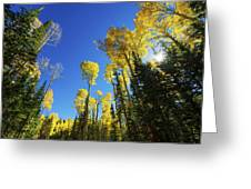 Fall Light Greeting Card