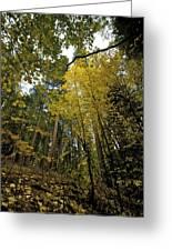 Fall Maple In Yosemite Greeting Card