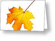 Fall Maple Leaf Greeting Card by Elena Elisseeva