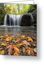 Fall Maple Leaves At Hidden Falls Greeting Card