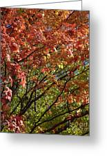 Fall Maples Green Gold Greeting Card