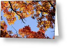 Fall Oak Leaves Up Above Greeting Card