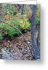 Fall On The Bike Trail Greeting Card