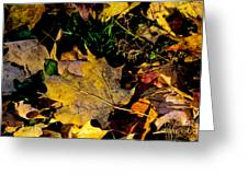 Fall On The Ground Greeting Card