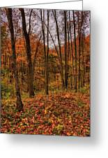 Fall On The Ice Age Trail Greeting Card