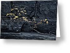 Fall On The Rocks Greeting Card