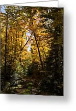 Fall Path In Golden Yellow Greeting Card