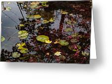 Fall Pond Reflections - A Story Of Waterlilies And Japanese Maple Trees - Take One Greeting Card